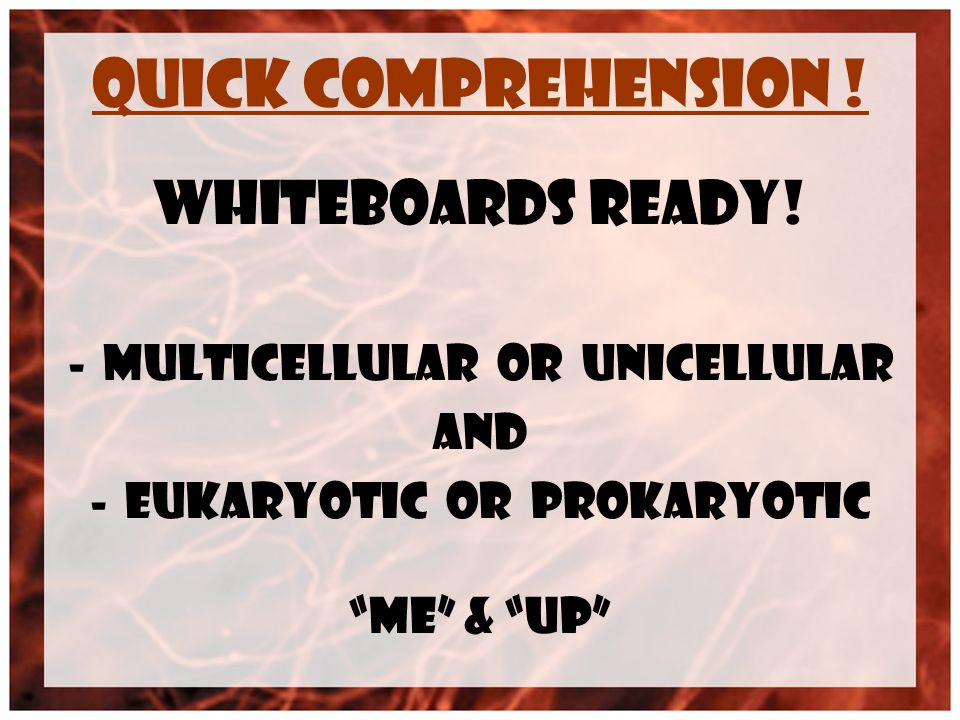 Quick Comprehension . Whiteboards Ready.