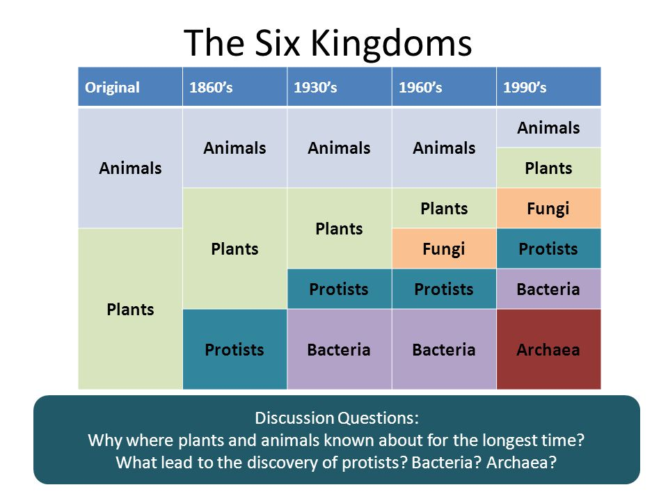 The Six Kingdoms Original1860's1930's1960's1990's Animals Plants Fungi Plants FungiProtists Bacteria ProtistsBacteria Archaea Discussion Questions: Why where plants and animals known about for the longest time.