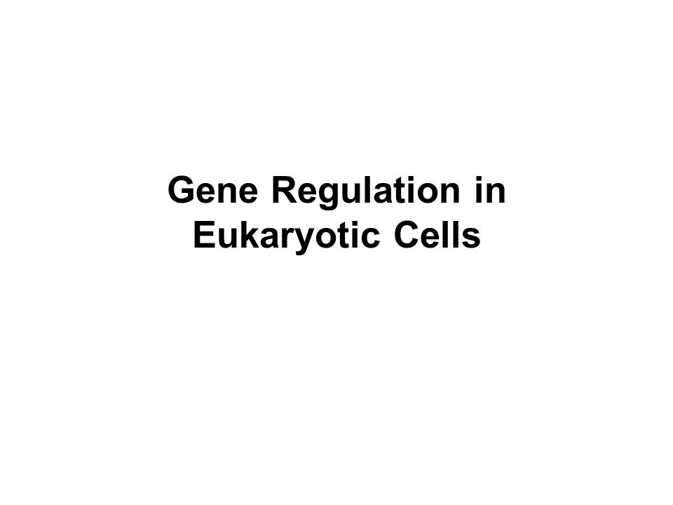 Gene Regulation in Eukaryotic Cells