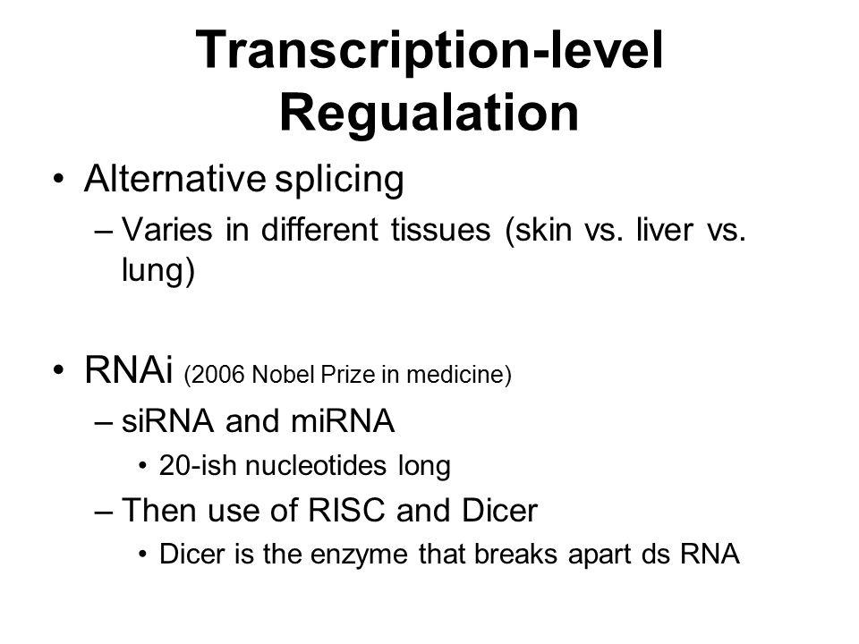 Transcription-level Regualation Alternative splicing –Varies in different tissues (skin vs.