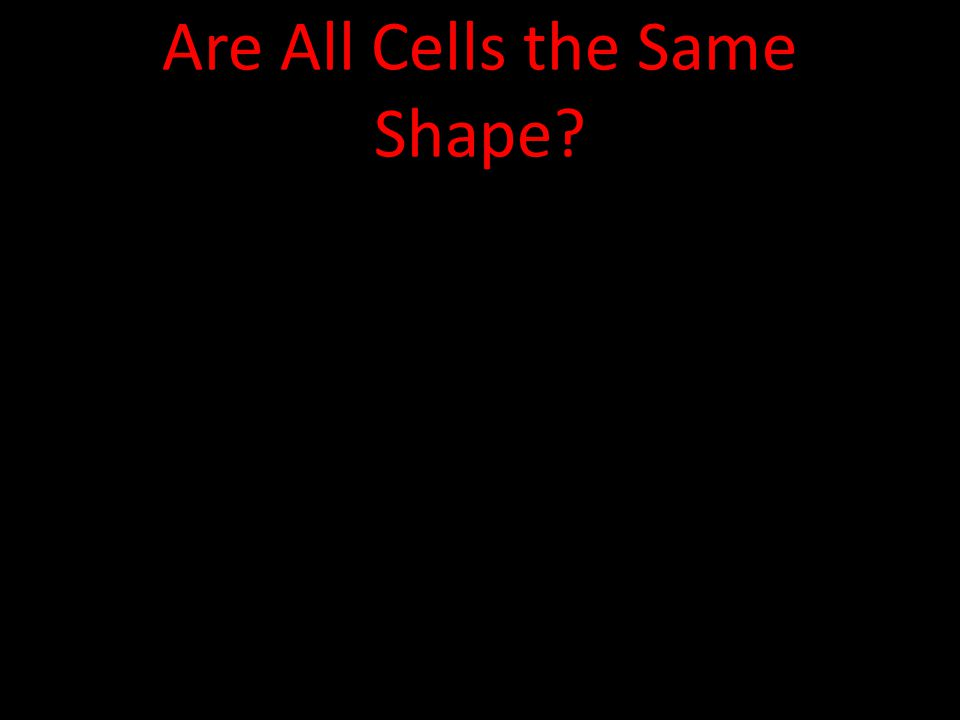 Are All Cells the Same Shape