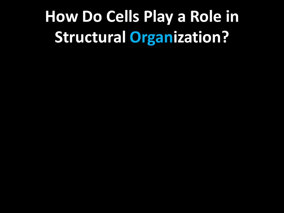 How Do Cells Play a Role in Structural Organization