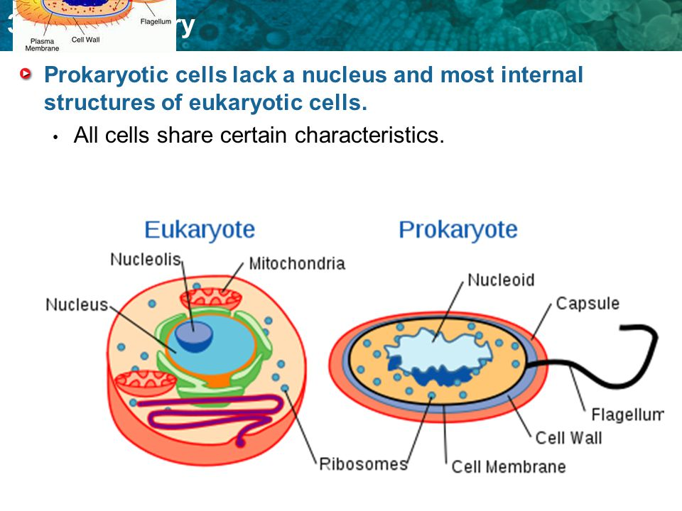 3.1 Cell Theory Prokaryotic cells lack a nucleus and most internal structures of eukaryotic cells. All cells share certain characteristics.