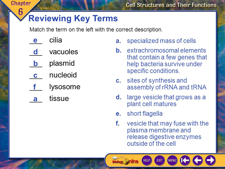 Chapter Highlights 1 Summary Prokaryotic cells are smaller and less specialized than eukaryotic cells.