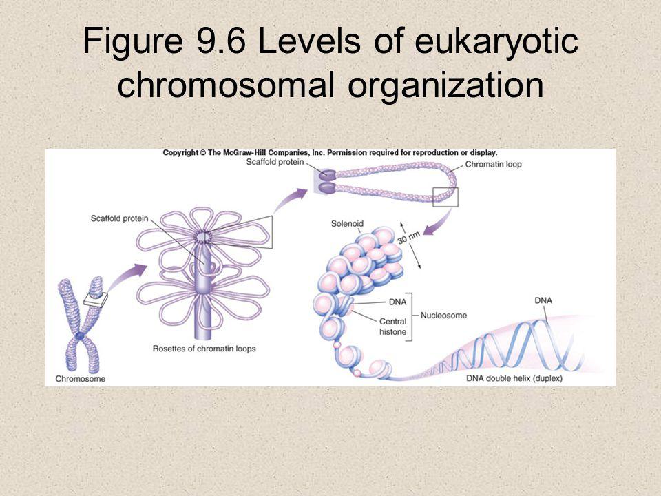 Figure 9.6 Levels of eukaryotic chromosomal organization