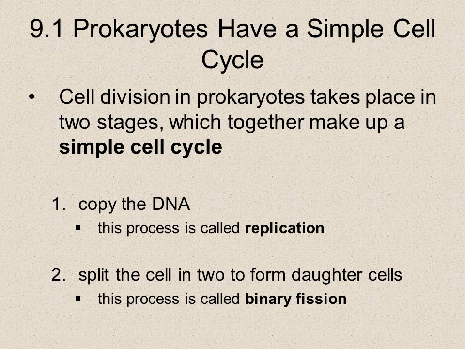 9.1 Prokaryotes Have a Simple Cell Cycle The hereditary information in a prokaryote is stored in DNA  the prokaryotic chromosome is a single circle of DNA  DNA replication begins with the unzipping of the double-stranded DNA at a point called the origin of replication  a new double helix is formed by adding complementary nucleotides to the exposed DNA strands that have been unzipped  the end result of replication is that the cell possess two complete copies of the hereditary information