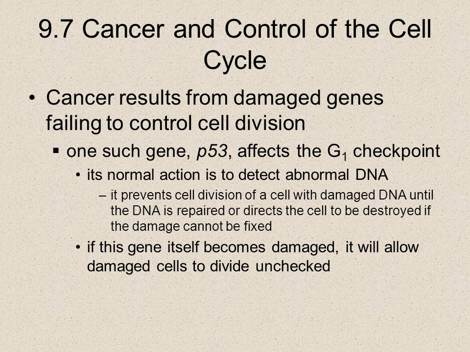 9.7 Cancer and Control of the Cell Cycle Cancer results from damaged genes failing to control cell division  one such gene, p53, affects the G 1 chec