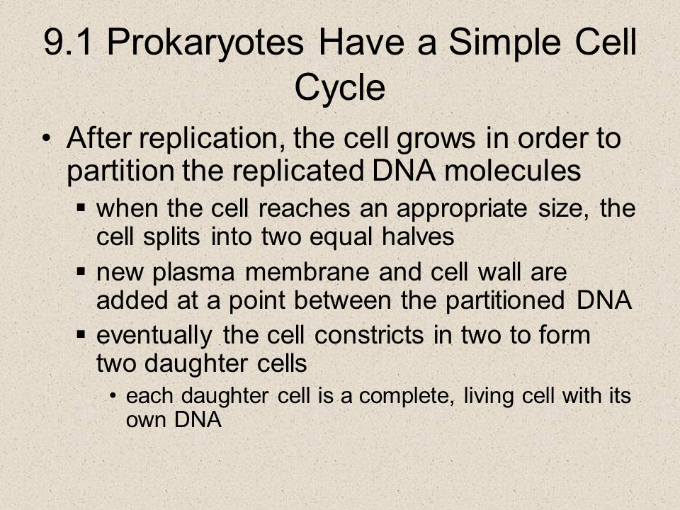 9.1 Prokaryotes Have a Simple Cell Cycle After replication, the cell grows in order to partition the replicated DNA molecules  when the cell reaches