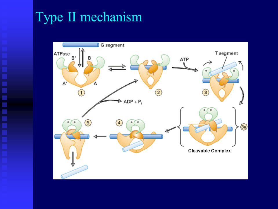 Type Termination of replication precatenanes Topo II removes precatenanes at the end of replication Prokaryotes : topo IV Eukaryotes : topo II  Type II topoisomerases