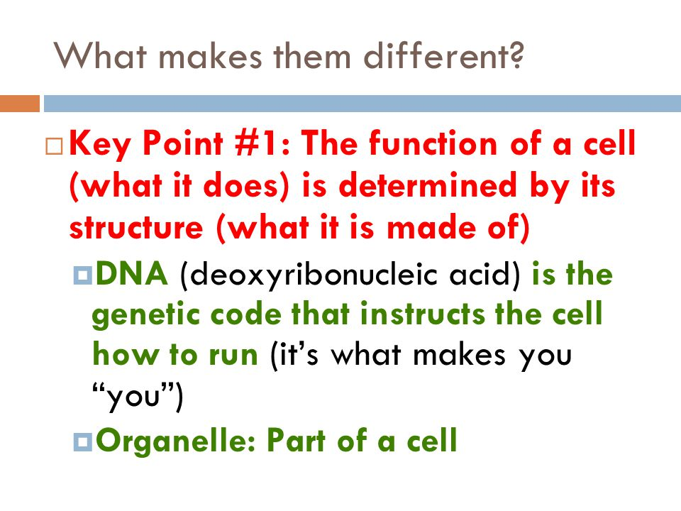 Cell membrane  The cell membrane is a thin, flexible barrier around the cell  It controls what goes in and out of the cell  All cells have this