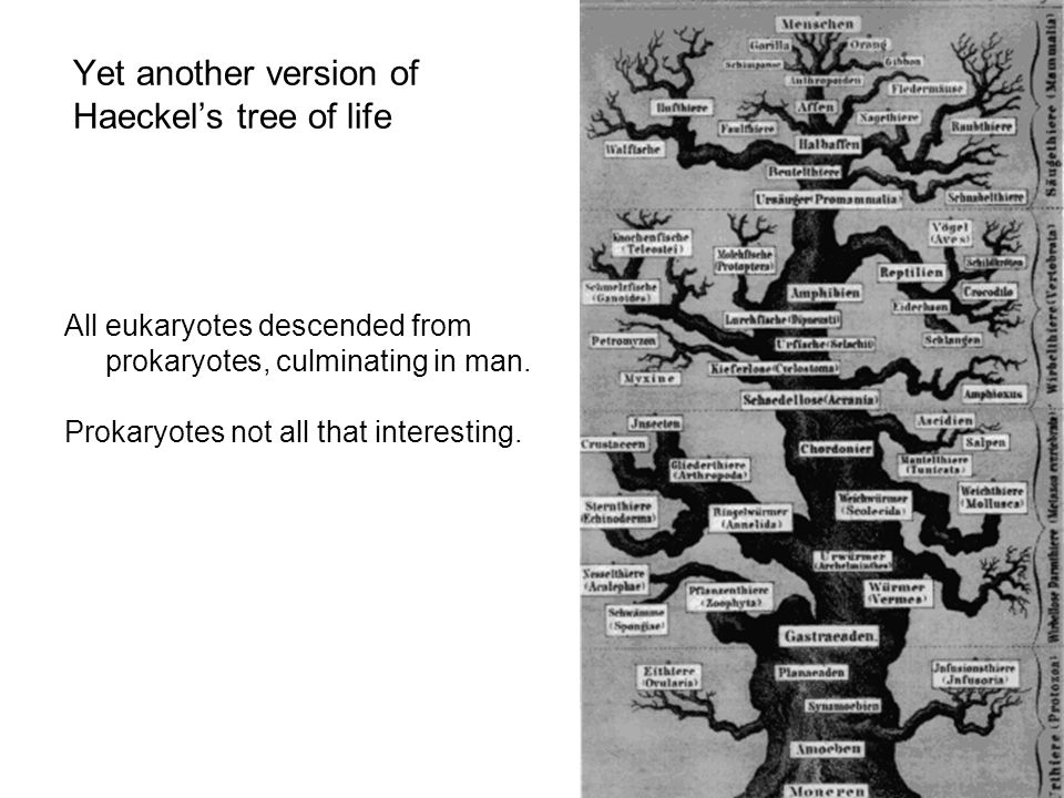 Archaea are more closely related to Eukaryotes than to Bacteria At first this was a big surprise - expected Bacteria and Archaea to be more similar to the exclusion of Eukaryotes 1989: Rooting the Tree of Life three studies: Gogarten et al.