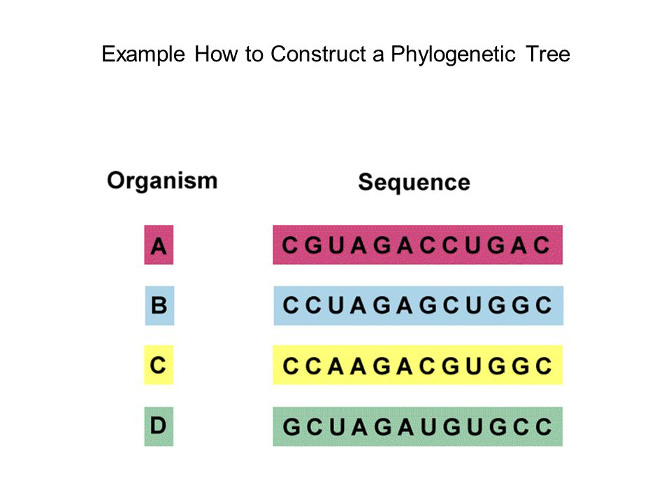 Example How to Construct a Phylogenetic Tree