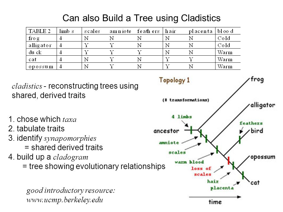 The Importance of Having A Phylogenetic Tree