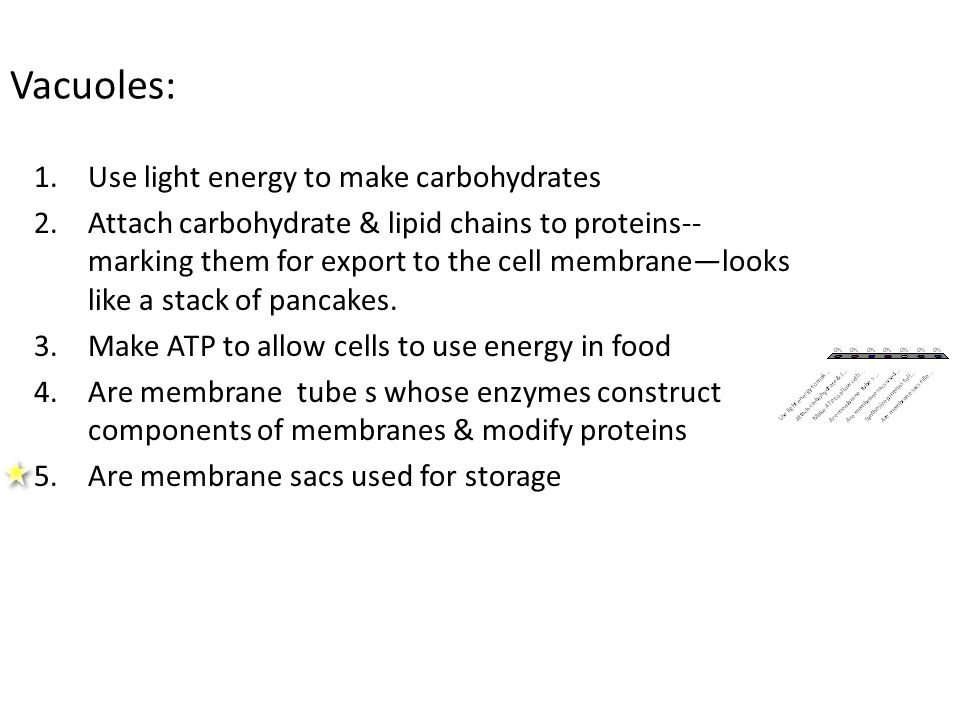 Vacuoles: 1.Use light energy to make carbohydrates 2.Attach carbohydrate & lipid chains to proteins-- marking them for export to the cell membrane—looks like a stack of pancakes.