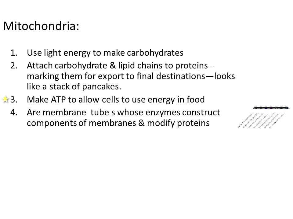Mitochondria: 1.Use light energy to make carbohydrates 2.Attach carbohydrate & lipid chains to proteins-- marking them for export to final destinations—looks like a stack of pancakes.