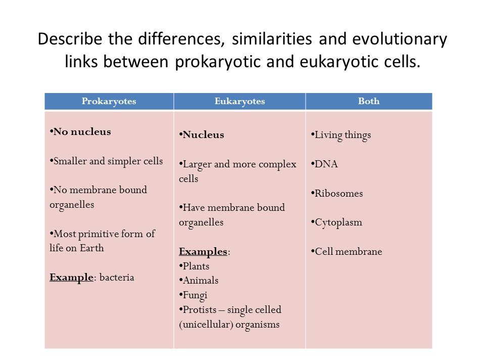 ProkaryotesEukaryotesBoth No nucleus Smaller and simpler cells No membrane bound organelles Most primitive form of life on Earth Example: bacteria Nuc