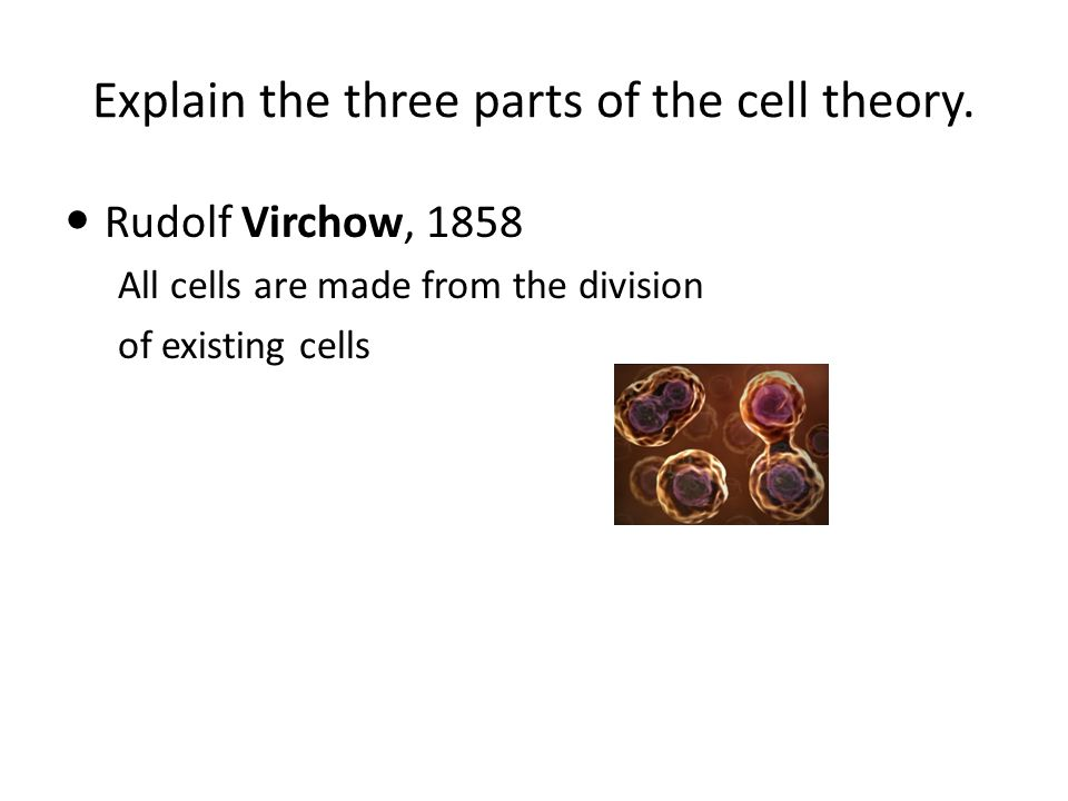 Explain the three parts of the cell theory. Rudolf Virchow, 1858 All cells are made from the division of existing cells