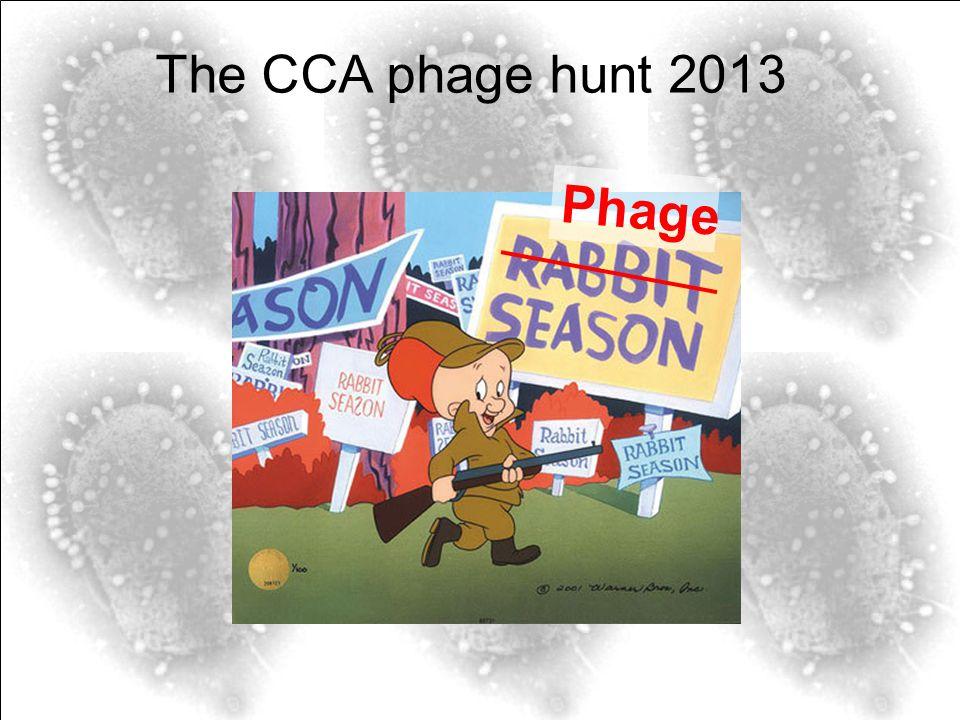 The CCA phage hunt 2013 Phage