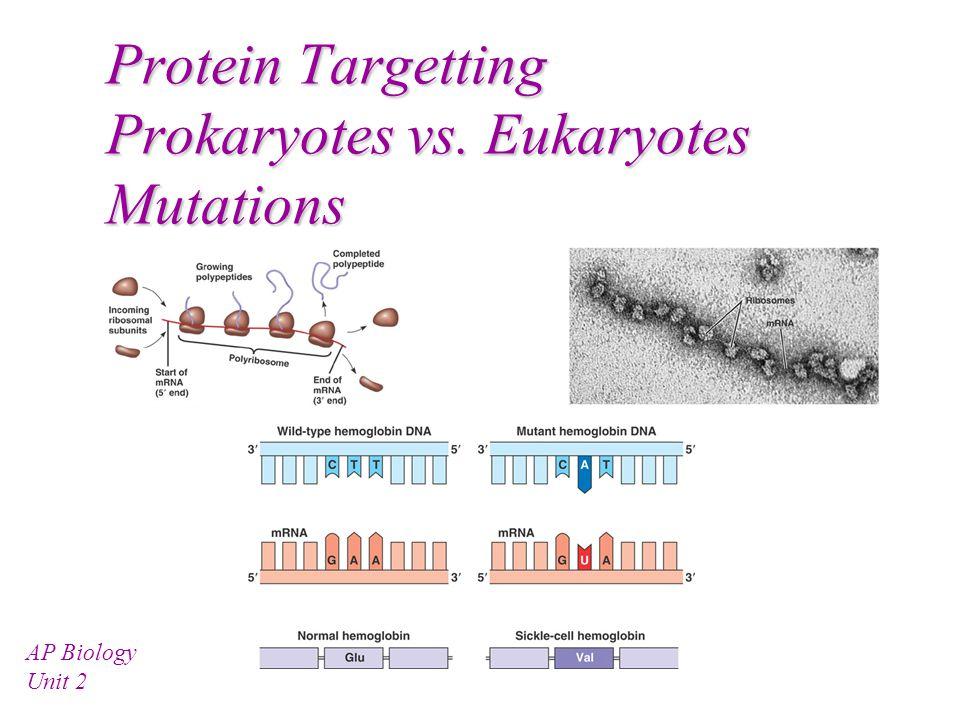 Protein Targetting Prokaryotes vs. Eukaryotes Mutations AP Biology Unit 2