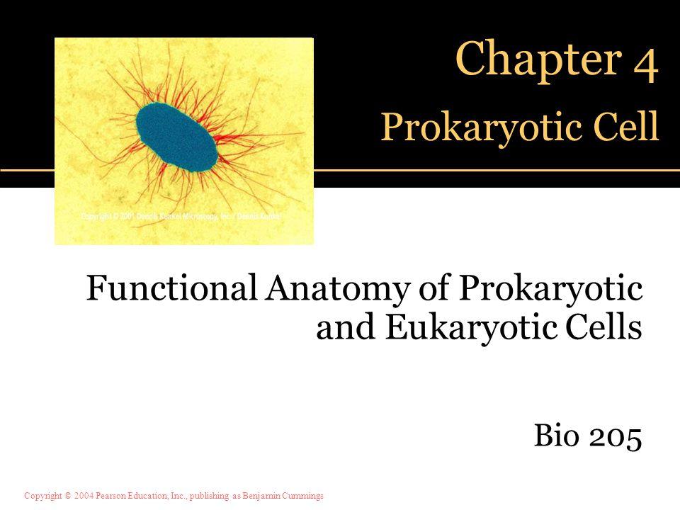 Copyright © 2004 Pearson Education, Inc., publishing as Benjamin Cummings Chapter 4 Prokaryotic Cell Functional Anatomy of Prokaryotic and Eukaryotic