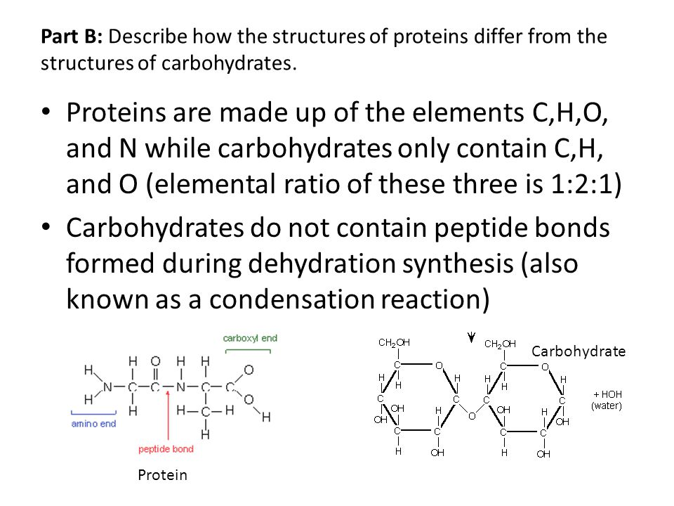 Part B: Describe how the structures of proteins differ from the structures of carbohydrates. Proteins are made up of the elements C,H,O, and N while c