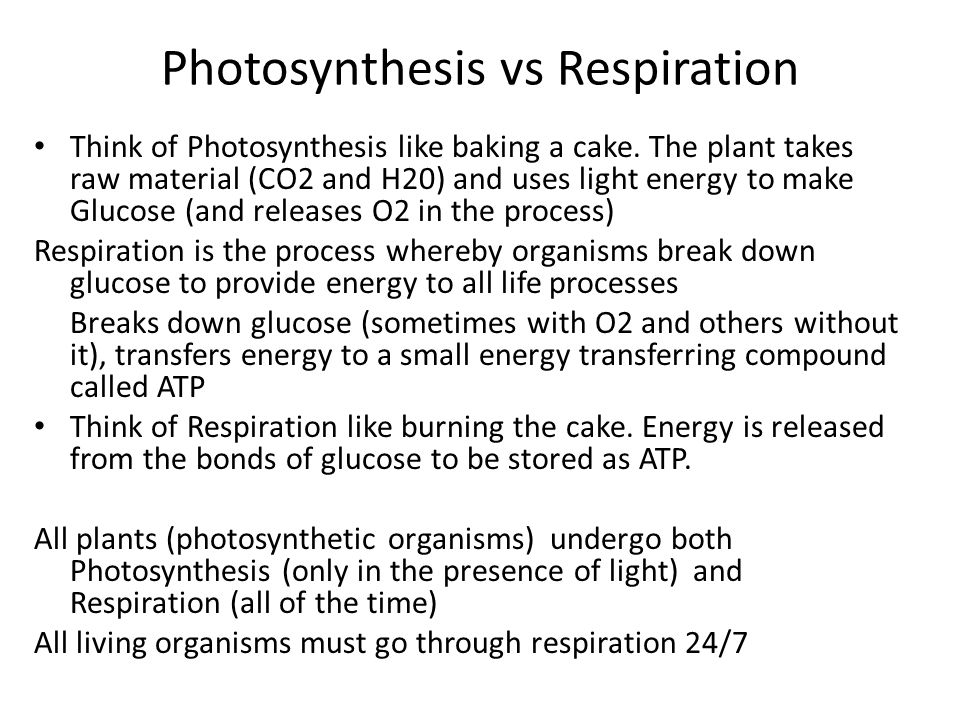 Photosynthesis vs Respiration Think of Photosynthesis like baking a cake. The plant takes raw material (CO2 and H20) and uses light energy to make Glu