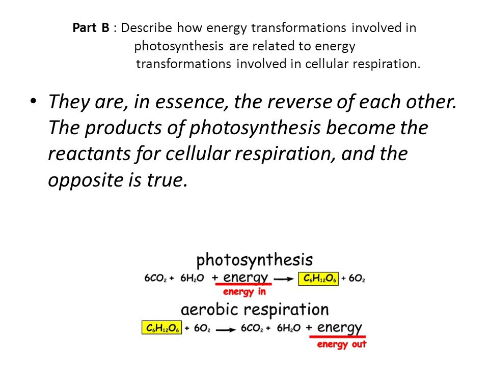 Part B : Describe how energy transformations involved in photosynthesis are related to energy transformations involved in cellular respiration. They a