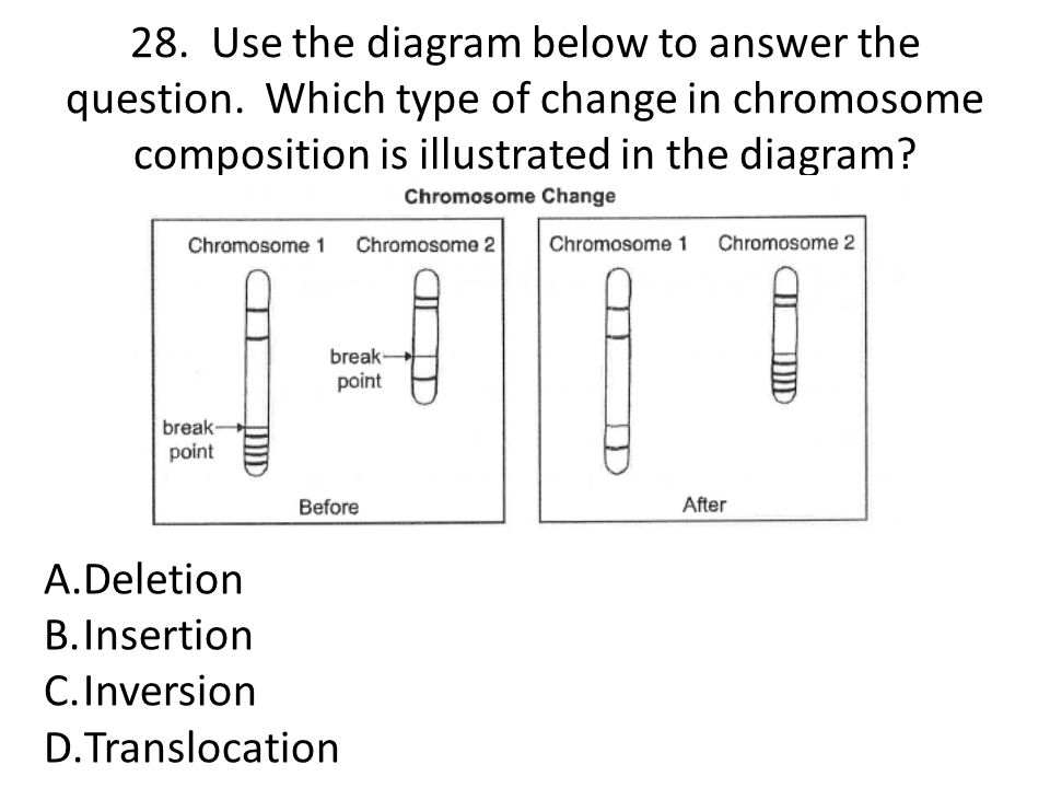 28. Use the diagram below to answer the question. Which type of change in chromosome composition is illustrated in the diagram? A.Deletion B.Insertion