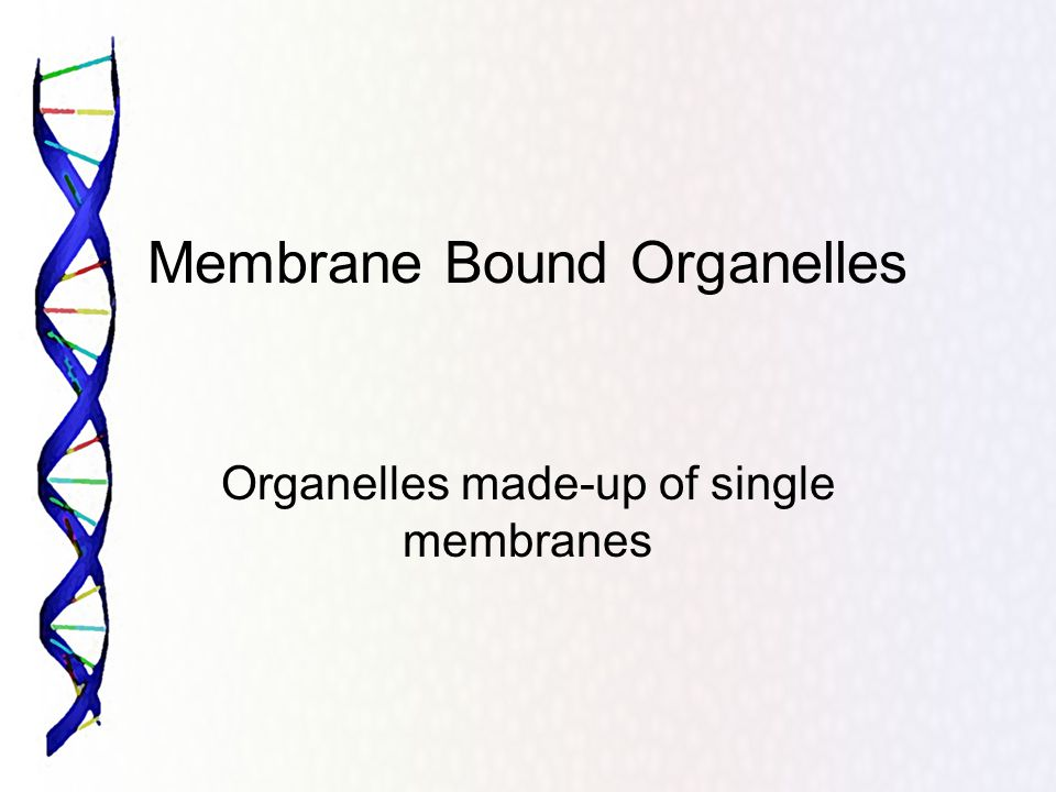 Membrane Bound Organelles Organelles made-up of single membranes