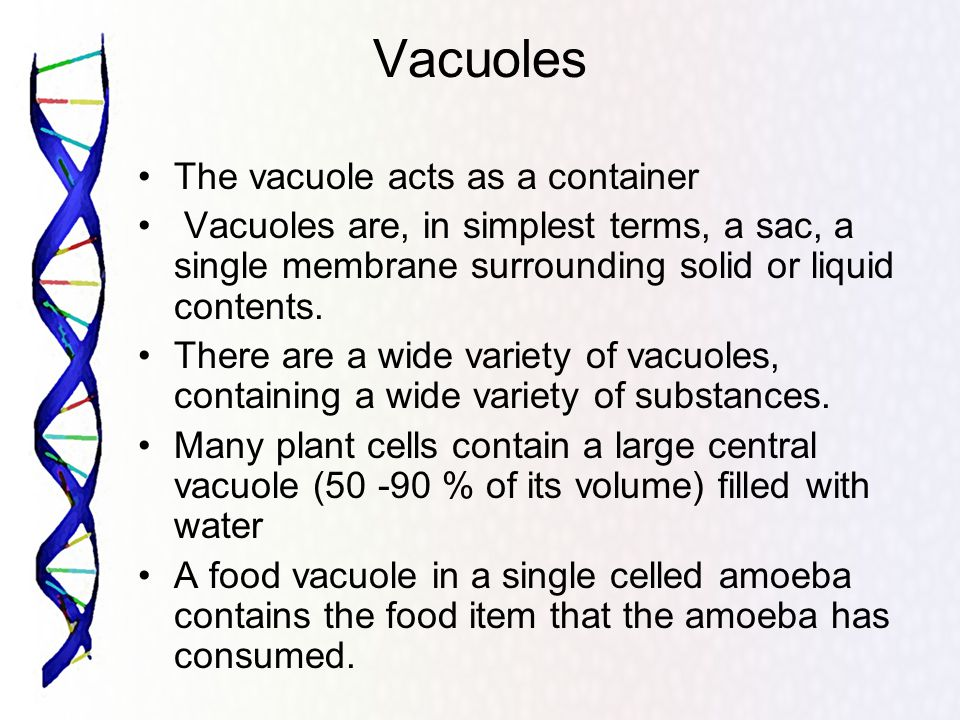 Vacuoles The vacuole acts as a container Vacuoles are, in simplest terms, a sac, a single membrane surrounding solid or liquid contents.
