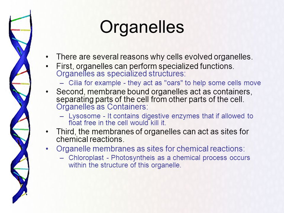Non Membrane Bound Organelles