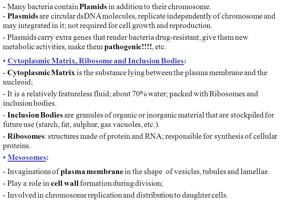 - Many bacteria contain Plamids in addition to their chromosome.