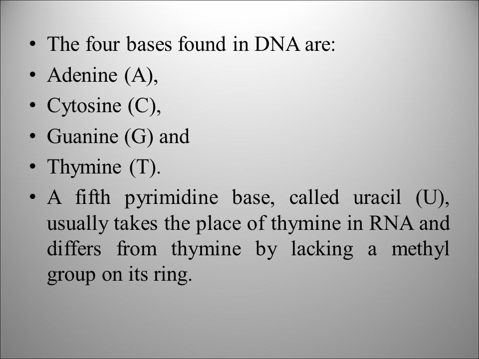 The four bases found in DNA are: Adenine (A), Cytosine (C), Guanine (G) and Thymine (T).