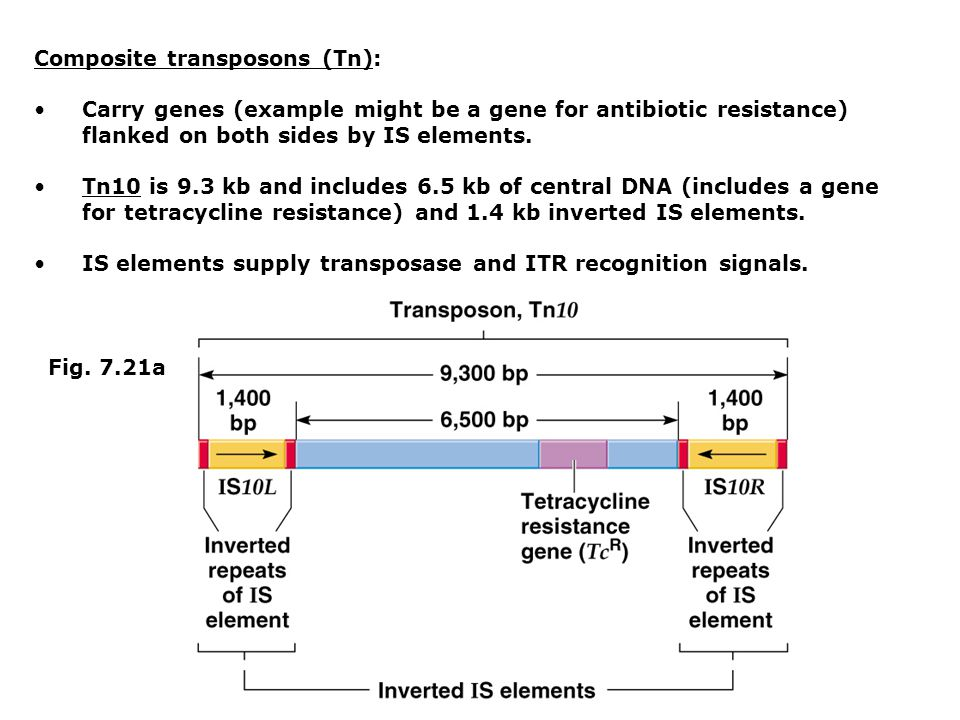 Composite transposons (Tn): Carry genes (example might be a gene for antibiotic resistance) flanked on both sides by IS elements.