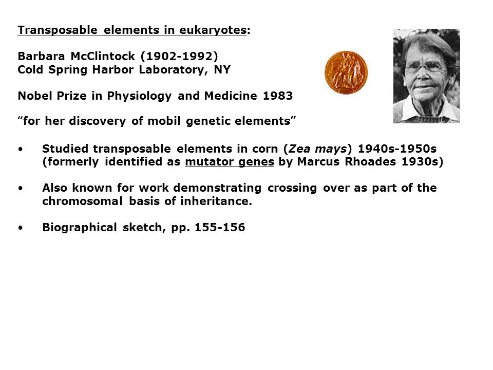Transposable elements in eukaryotes: Barbara McClintock (1902-1992) Cold Spring Harbor Laboratory, NY Nobel Prize in Physiology and Medicine 1983 for her discovery of mobil genetic elements Studied transposable elements in corn (Zea mays) 1940s-1950s (formerly identified as mutator genes by Marcus Rhoades 1930s) Also known for work demonstrating crossing over as part of the chromosomal basis of inheritance.