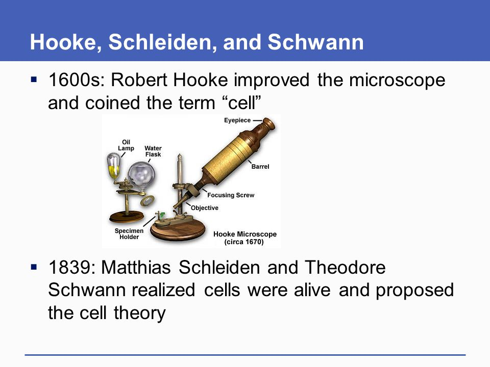"Hooke, Schleiden, and Schwann  1600s: Robert Hooke improved the microscope and coined the term ""cell""  1839: Matthias Schleiden and Theodore Schwann"