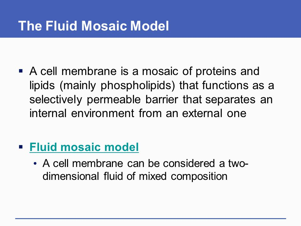 The Fluid Mosaic Model  A cell membrane is a mosaic of proteins and lipids (mainly phospholipids) that functions as a selectively permeable barrier t