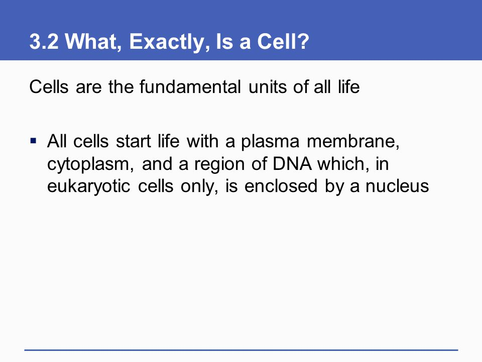 3.2 What, Exactly, Is a Cell? Cells are the fundamental units of all life  All cells start life with a plasma membrane, cytoplasm, and a region of DN