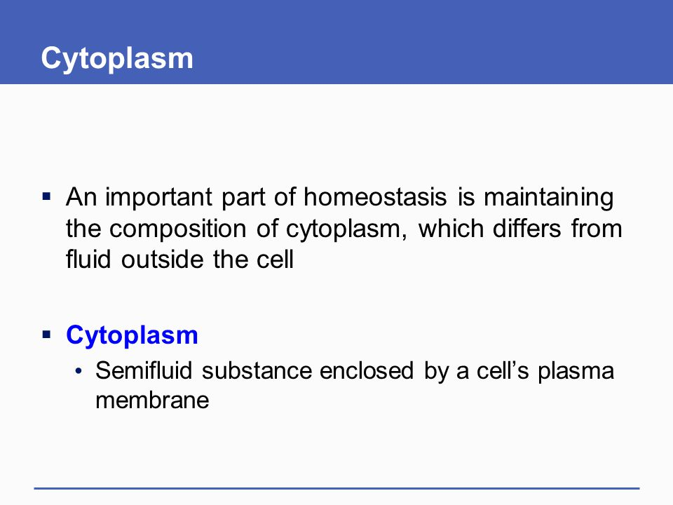 Cytoplasm  An important part of homeostasis is maintaining the composition of cytoplasm, which differs from fluid outside the cell  Cytoplasm Semifl