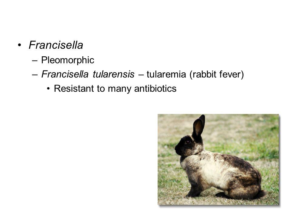 Francisella –Pleomorphic –Francisella tularensis – tularemia (rabbit fever) Resistant to many antibiotics