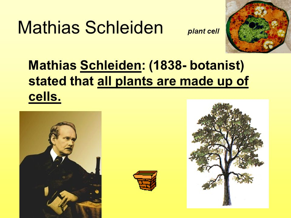 Mathias Schleiden plant cell Mathias Schleiden: (1838- botanist) stated that all plants are made up of cells.