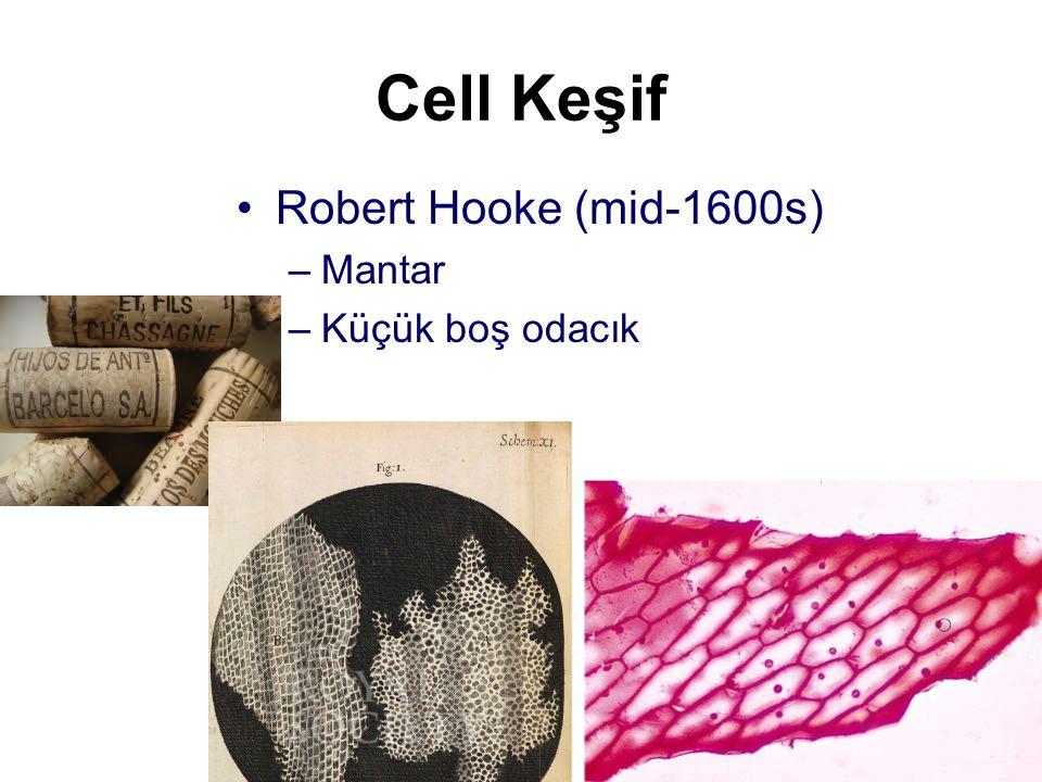 Cell theory Tüm organizma bir veya daha fazla hücreden oluşur Bir hücre bir önceki hücreden bölünme ile olur Organizmadaki en küçük canlı yapı