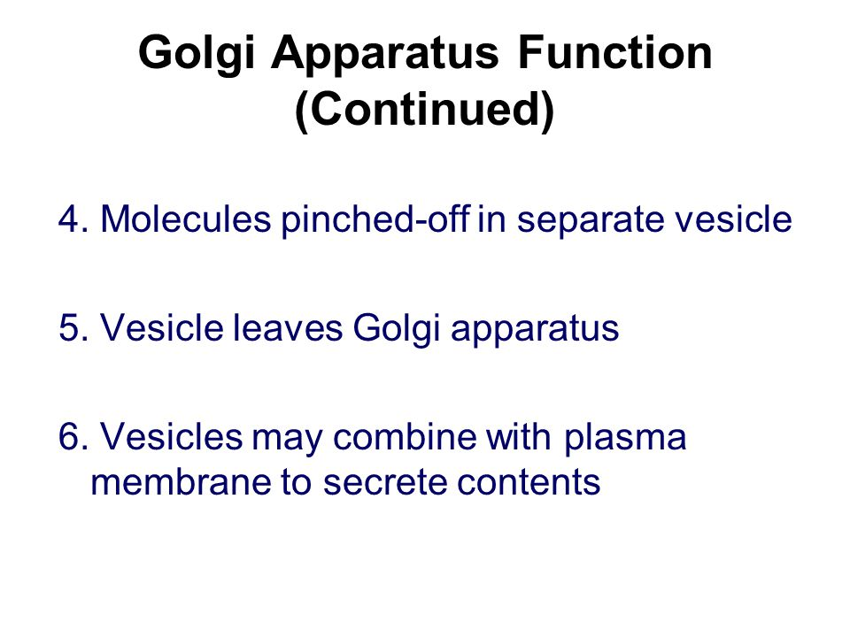 Golgi Apparatus Function (Continued) 4. Molecules pinched-off in separate vesicle 5.