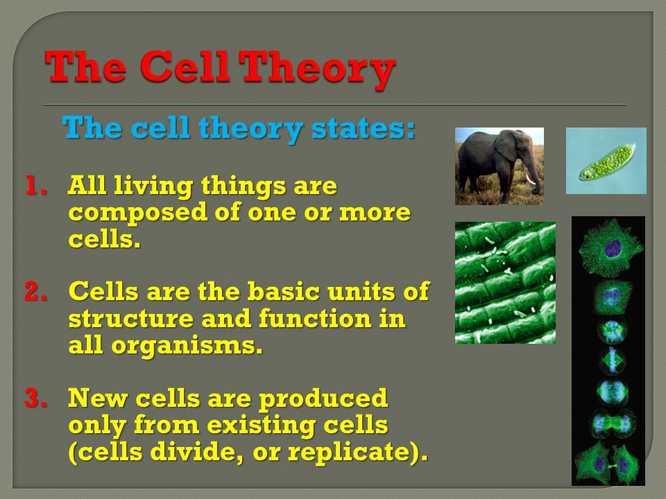 The cell theory states: 1.All living things are composed of one or more cells.