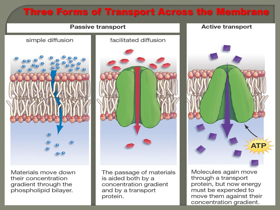 44 Three Forms of Transport Across the Membrane