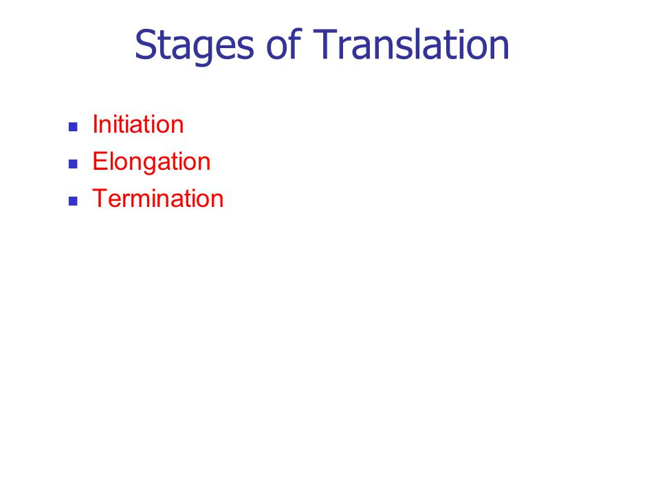 Stages of Translation Initiation Elongation Termination