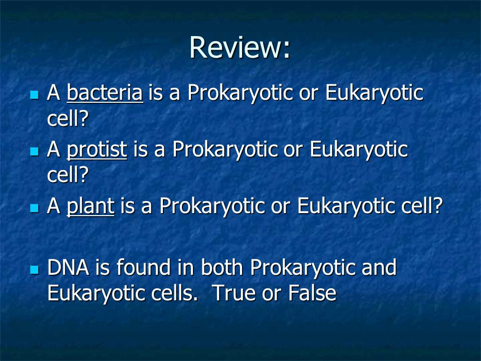 Review: A bacteria is a Prokaryotic or Eukaryotic cell? A bacteria is a Prokaryotic or Eukaryotic cell? A protist is a Prokaryotic or Eukaryotic cell?