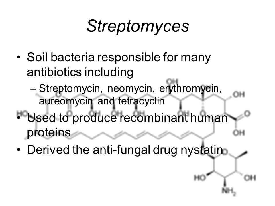 Streptomyces Soil bacteria responsible for many antibiotics including –Streptomycin, neomycin, erythromycin, aureomycin and tetracyclin Used to produce recombinant human proteins Derived the anti-fungal drug nystatin