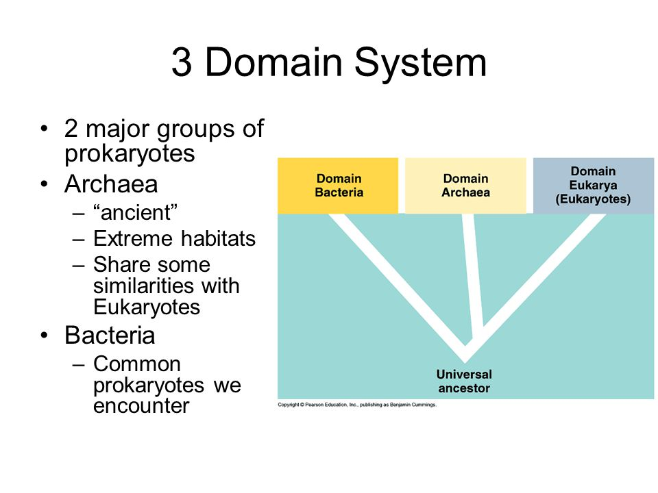 3 Domain System 2 major groups of prokaryotes Archaea – ancient –Extreme habitats –Share some similarities with Eukaryotes Bacteria –Common prokaryotes we encounter