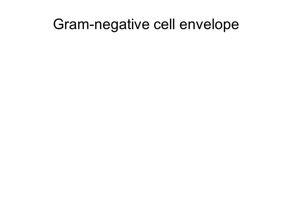 Gram-negative cell envelope